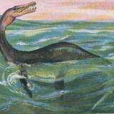 Plesiosaurus (Плезиозавр)