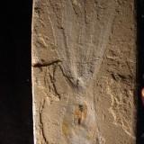 Уникальная окаменелость осьминога