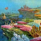 Подводный ландшафт. Коралловые рифы