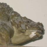 Скутозавр