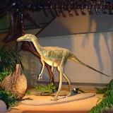 Troodon (Троодон)