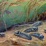 Trilobites (Трилобиты)