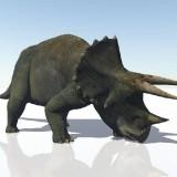 Triceratops (Трицератопс)
