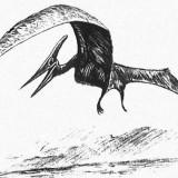 Pteranodon (Птеранодон)