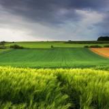 Ковер земледельца