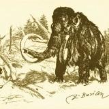 Мамонт и неандерталец