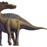 Amargosaurus