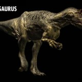 Allosaurus (Аллозавр)