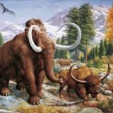 Мамонт и бизон