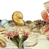 Обитатели кембрийского моря