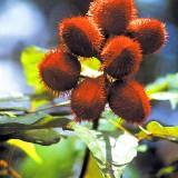 Природа амазонии