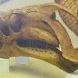 Altirhinus kurzanovi (Альтирин Курзанова)