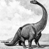 Gigantosaurus (Гигантозавр)