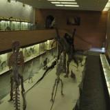 Зал мезозоя в Палеонтологическом музее