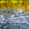 На киевском пруду