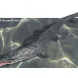 Metriorhynchus (Метриоринх)