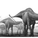 Apatosaurus (Бронтозавр)