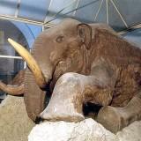Березовский мамонт