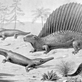 Naosaurus