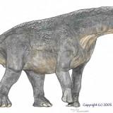 Titanosaurus Colberti