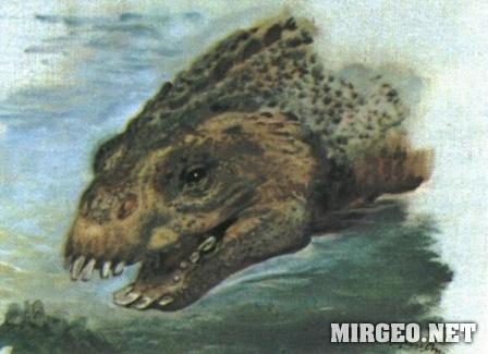 Placodus (Плакод)