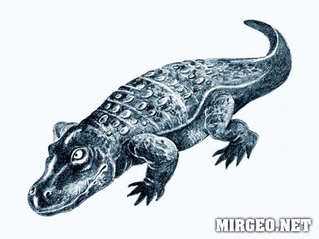 Eryops megacephalus