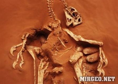 Oviraptor philoceratops (Овираптор)