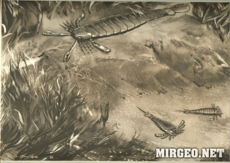 Pterygotus и Eurypterus