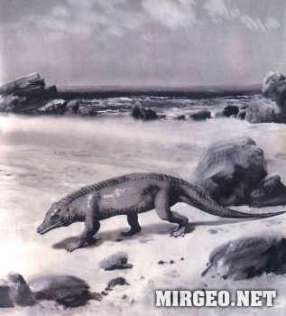 Protosuchus (Протозух)