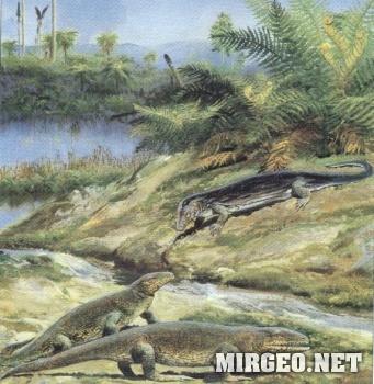 Животный мир каменноугольного периода