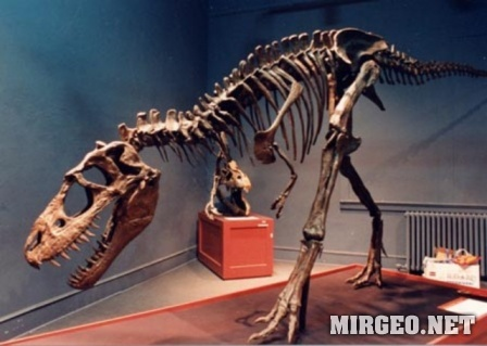 Аlbertosaur (Альбертозавр)