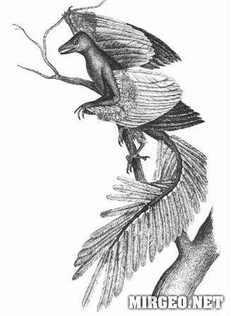 Archeopteryx (Археоптерикс)