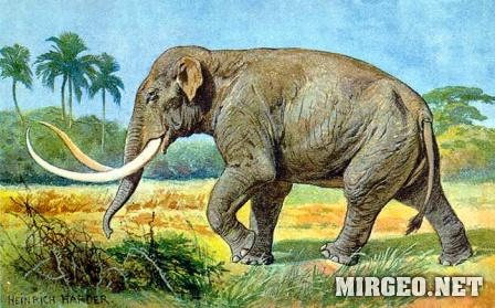 Imperial Elephant