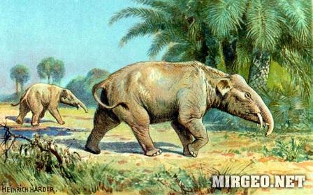 Paleomastodon